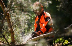 Waldarbeiten mit der Stihl Motorsäge